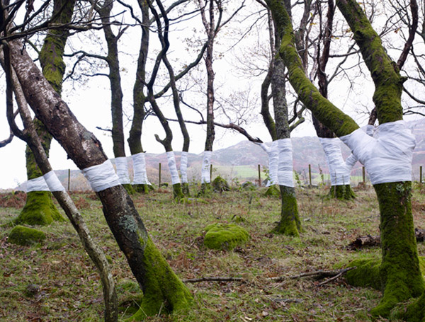 Optical illusions with trees