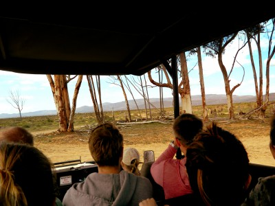 Inverdoorn Safari – Car