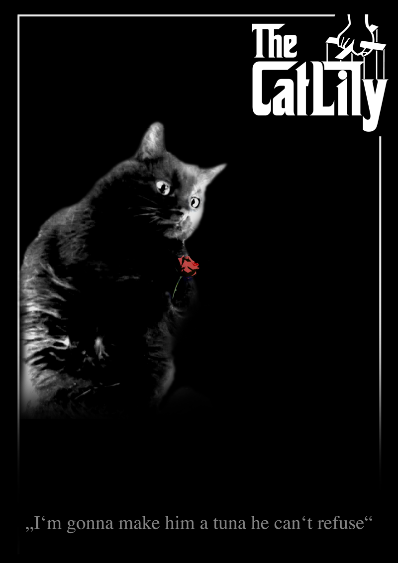 My Cat Lily in the movies